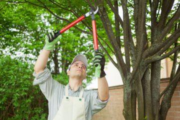 Tree Trim/Shrub Prune