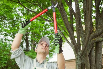 Tree Trim/Shrub Prune